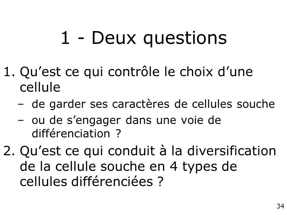 34 1 - Deux questions 1.Quest ce qui contrôle le choix dune cellule –de garder ses caractères de cellules souche –ou de sengager dans une voie de diff