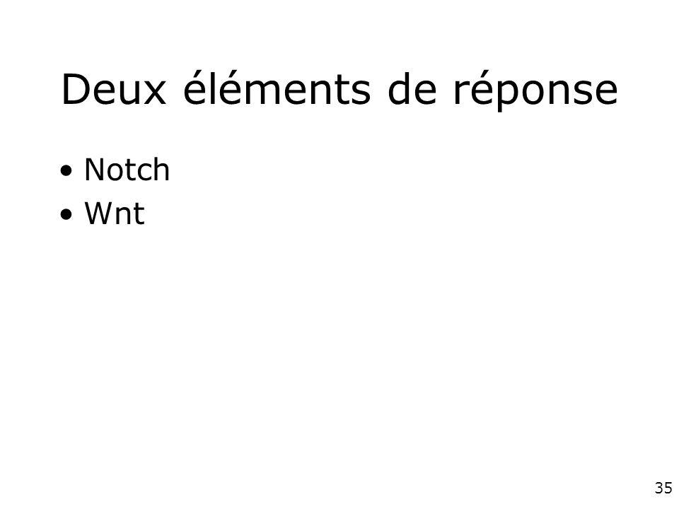 35 Deux éléments de réponse Notch Wnt