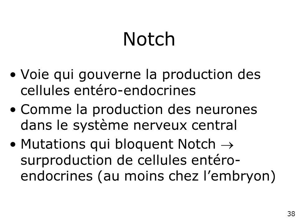 38 Notch Voie qui gouverne la production des cellules entéro-endocrines Comme la production des neurones dans le système nerveux central Mutations qui