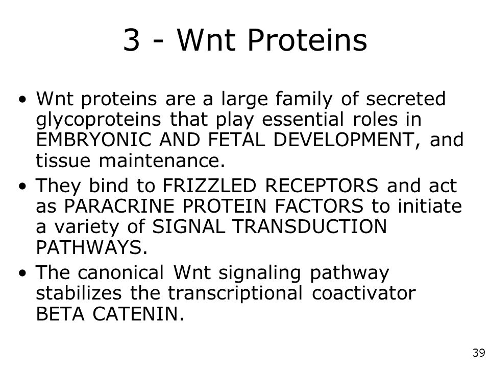 39 3 - Wnt Proteins Wnt proteins are a large family of secreted glycoproteins that play essential roles in EMBRYONIC AND FETAL DEVELOPMENT, and tissue
