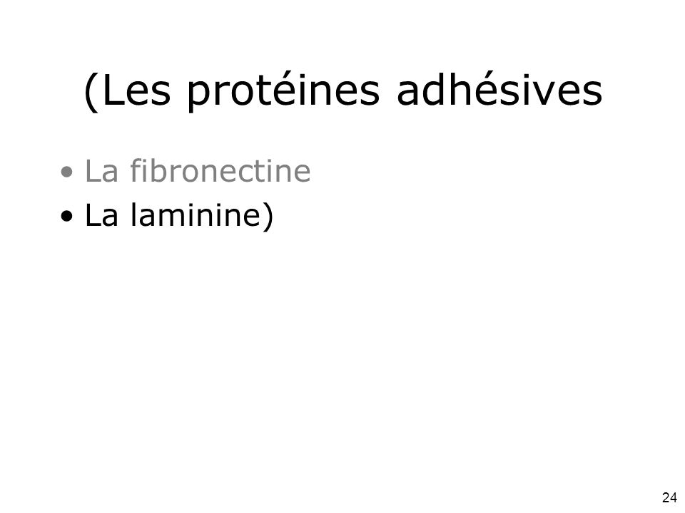 24 (Les protéines adhésives La fibronectine La laminine)