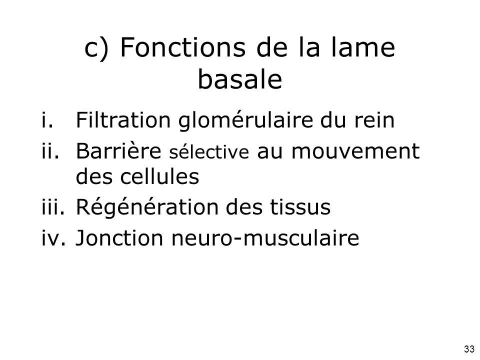 33 c) Fonctions de la lame basale i.Filtration glomérulaire du rein ii.Barrière sélective au mouvement des cellules iii.Régénération des tissus iv.Jon