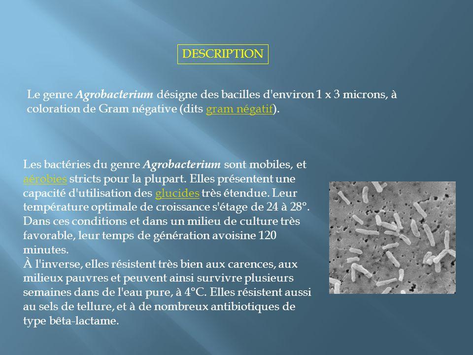 Les bactéries du genre Agrobacterium sont mobiles, et aérobies stricts pour la plupart. Elles présentent une capacité d'utilisation des glucides très