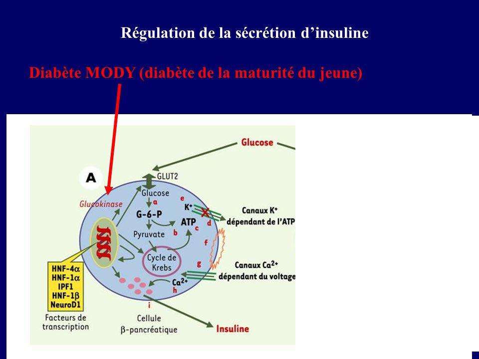 Régulation de la sécrétion dinsuline Diabète MODY (diabète de la maturité du jeune)