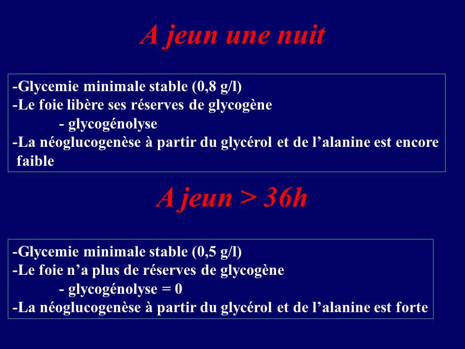 A jeun une nuit -Glycemie minimale stable (0,8 g/l) -Le foie libère ses réserves de glycogène - glycogénolyse -La néoglucogenèse à partir du glycérol