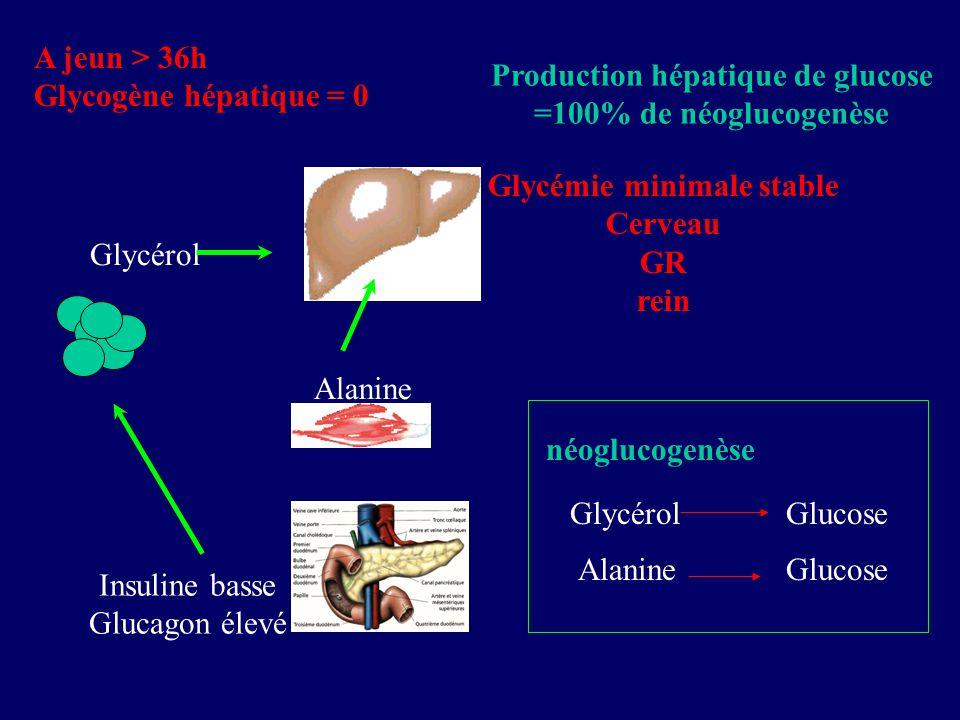 Production hépatique de glucose =100% de néoglucogenèse A jeun > 36h Glycogène hépatique = 0 Insuline basse Glucagon élevé Glycémie minimale stable Ce