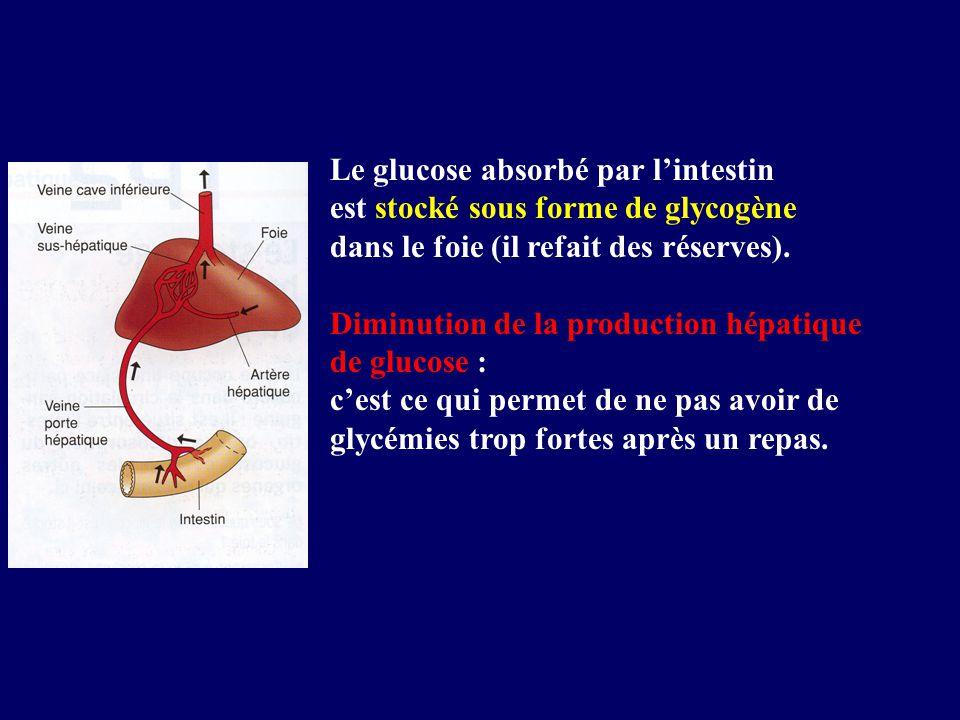 Le glucose absorbé par lintestin est stocké sous forme de glycogène dans le foie (il refait des réserves). Diminution de la production hépatique de gl