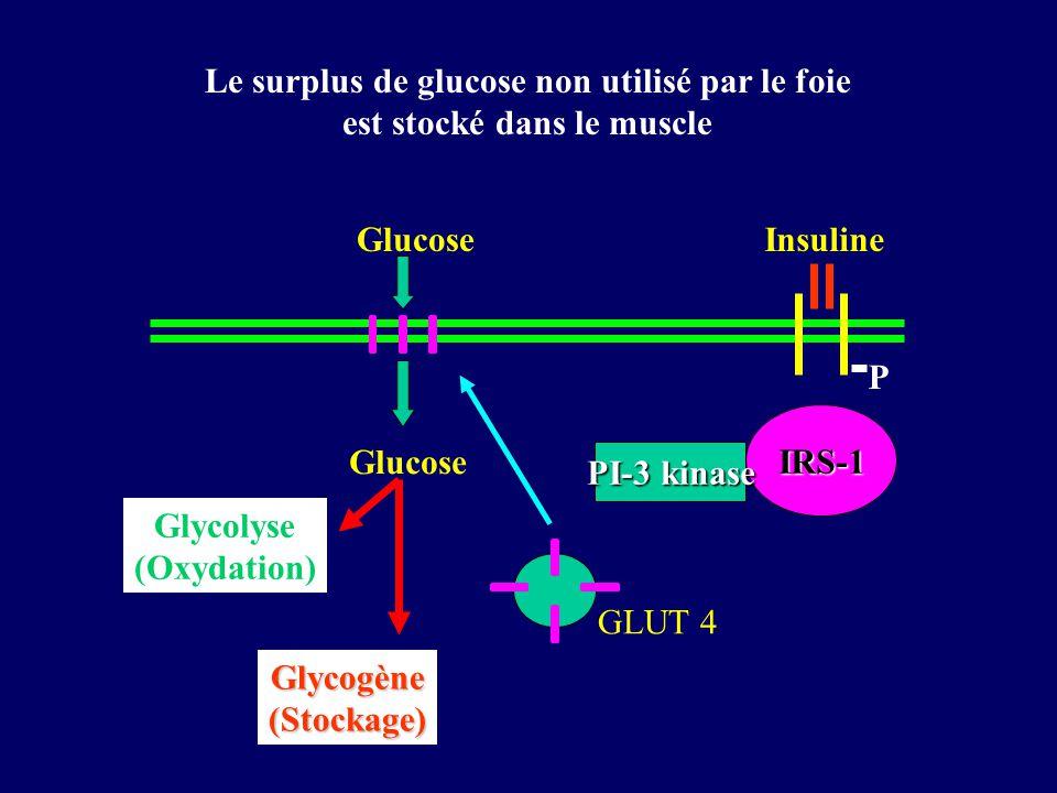 P IRS-1 PI-3 kinase Glucose GLUT 4 Glucose Glycolyse (Oxydation) Glycogène(Stockage) Insuline Le surplus de glucose non utilisé par le foie est stocké