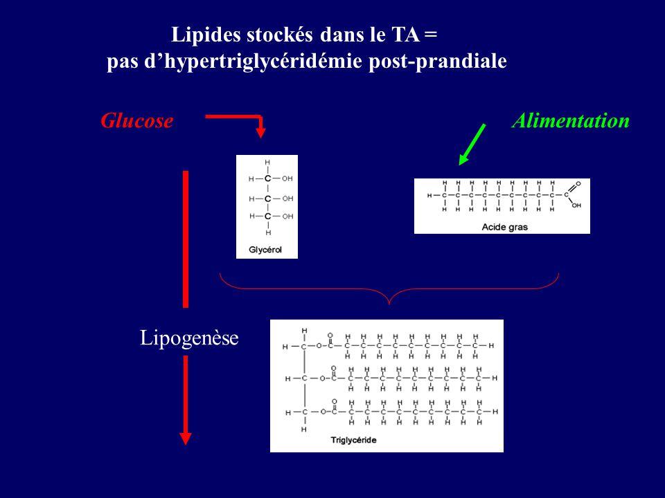 Lipogenèse Lipides stockés dans le TA = pas dhypertriglycéridémie post-prandiale GlucoseAlimentation