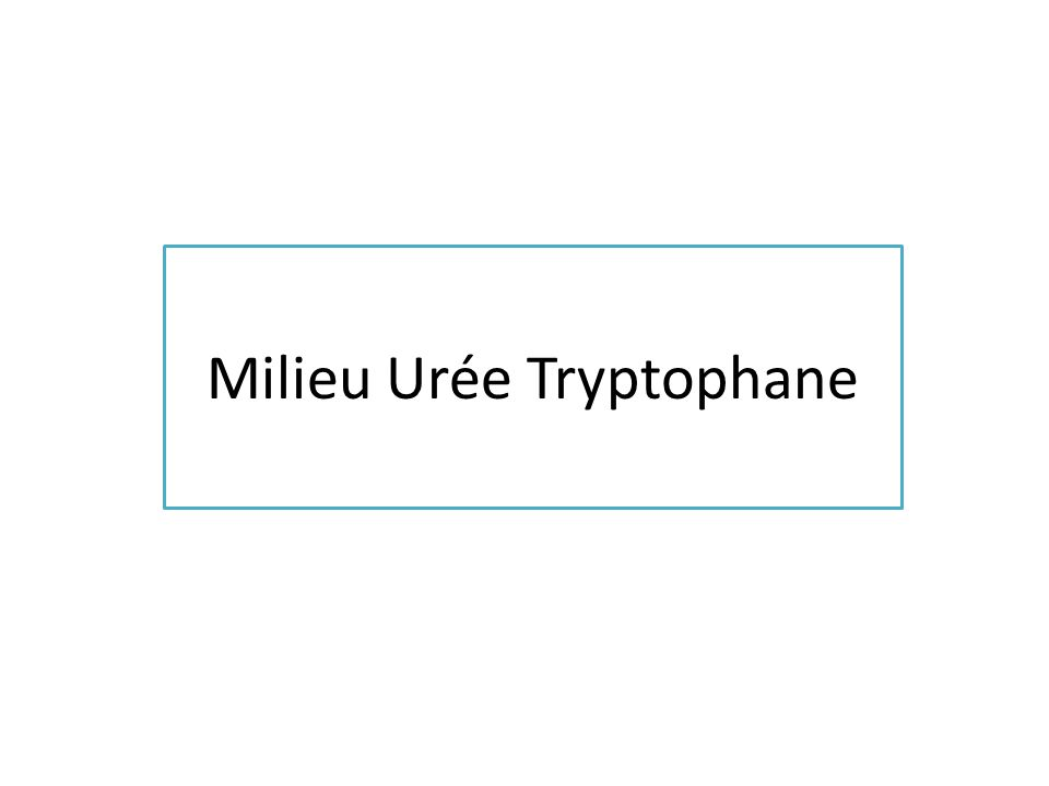 Milieu Urée Tryptophane