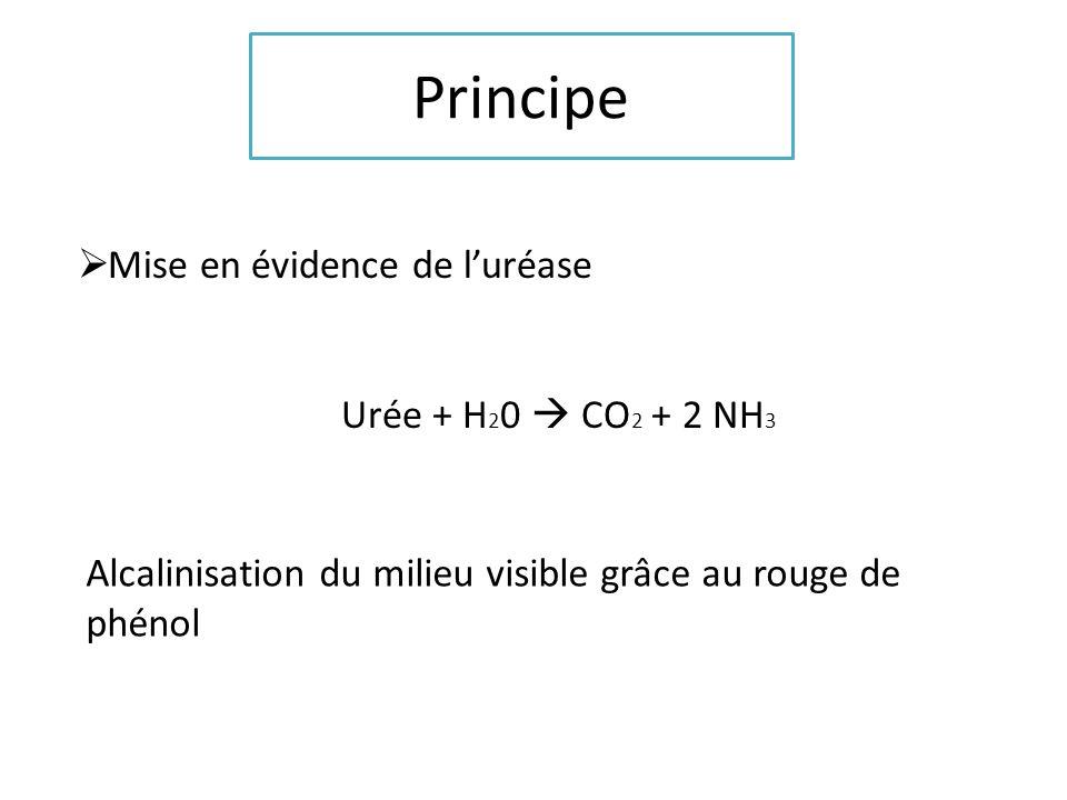 Principe Mise en évidence de luréase Urée + H 2 0 CO 2 + 2 NH 3 Alcalinisation du milieu visible grâce au rouge de phénol