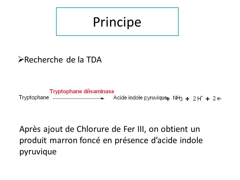 Principe Recherche de la tryptophanase Après ajout du réactif de Kovacs, on observe un anneau rose se former en présence dindole