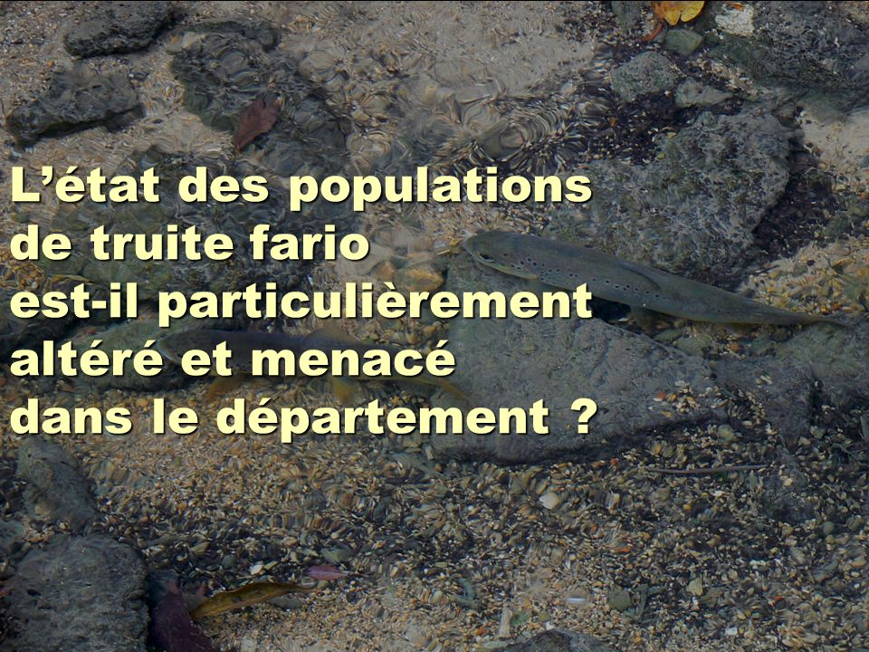 Létat des populations de truite fario est-il particulièrement altéré et menacé dans le département