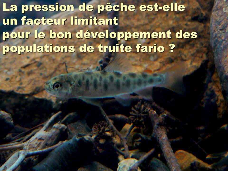 La pression de pêche est-elle un facteur limitant pour le bon développement des populations de truite fario