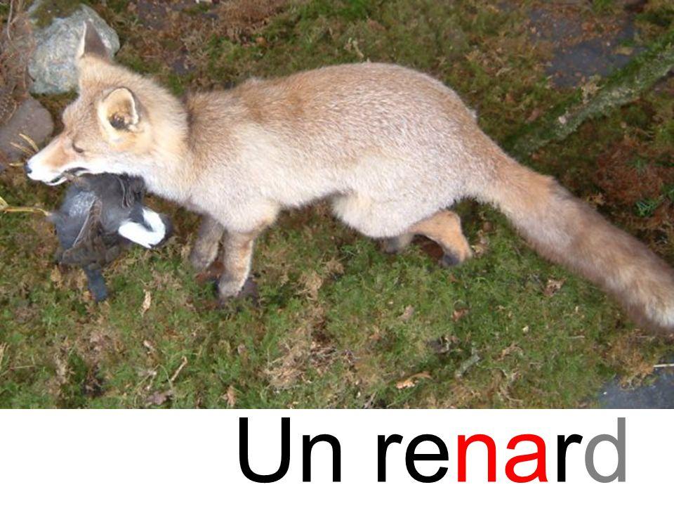 na renard Un renard