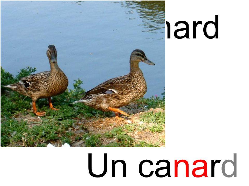 na canard Un canard