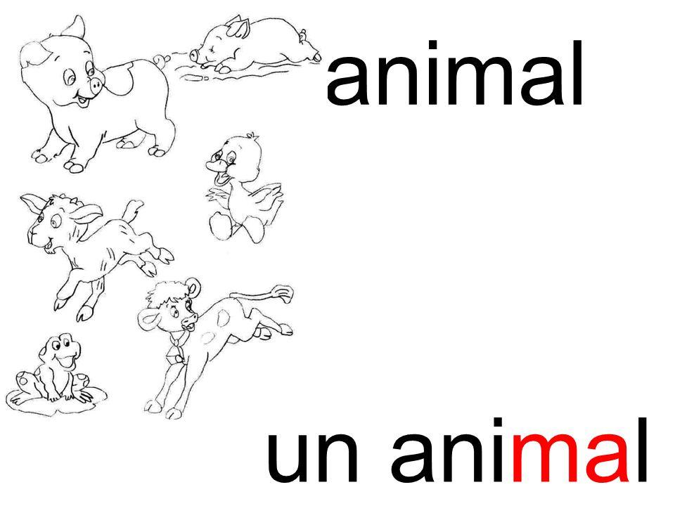 ma animal un animal