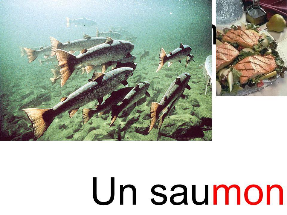 mon saumon Un saumon