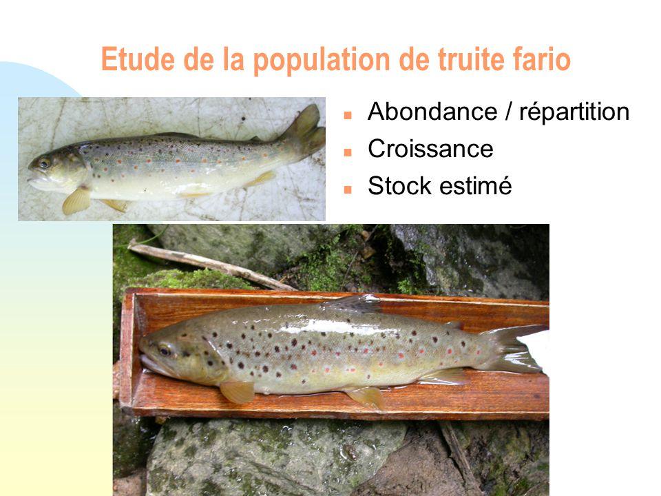 Etude de la population de truite fario n Abondance / répartition n Croissance n Stock estimé