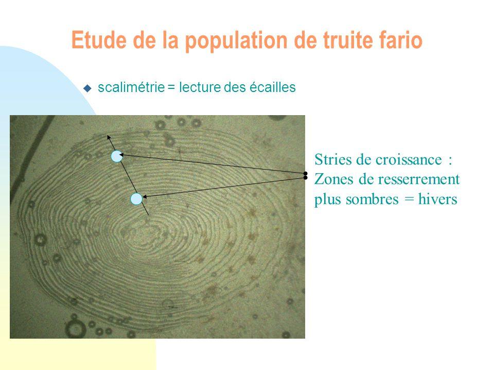 u scalimétrie = lecture des écailles Etude de la population de truite fario Stries de croissance : Zones de resserrement plus sombres = hivers