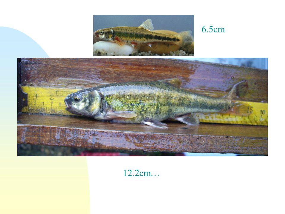 12.2cm… 6.5cm