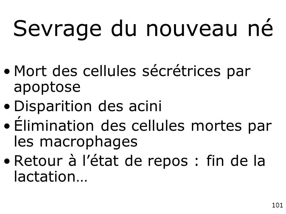 101 Sevrage du nouveau né Mort des cellules sécrétrices par apoptose Disparition des acini Élimination des cellules mortes par les macrophages Retour à létat de repos : fin de la lactation…
