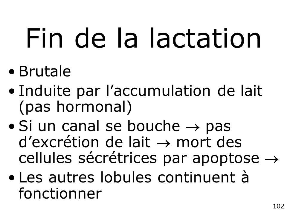 102 Fin de la lactation Brutale Induite par laccumulation de lait (pas hormonal) Si un canal se bouche pas dexcrétion de lait mort des cellules sécrétrices par apoptose Les autres lobules continuent à fonctionner