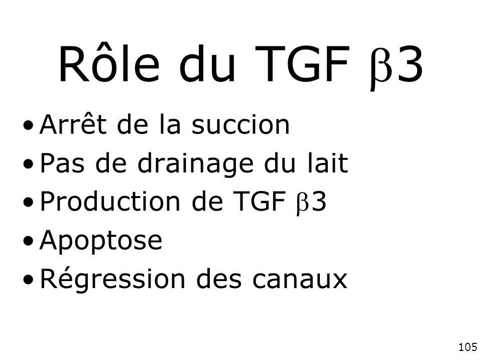 105 Rôle du TGF 3 Arrêt de la succion Pas de drainage du lait Production de TGF 3 Apoptose Régression des canaux