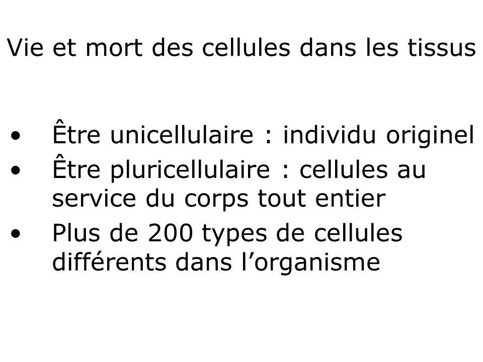 Vie et mort des cellules dans les tissus Être unicellulaire : individu originel Être pluricellulaire : cellules au service du corps tout entier Plus de 200 types de cellules différents dans lorganisme
