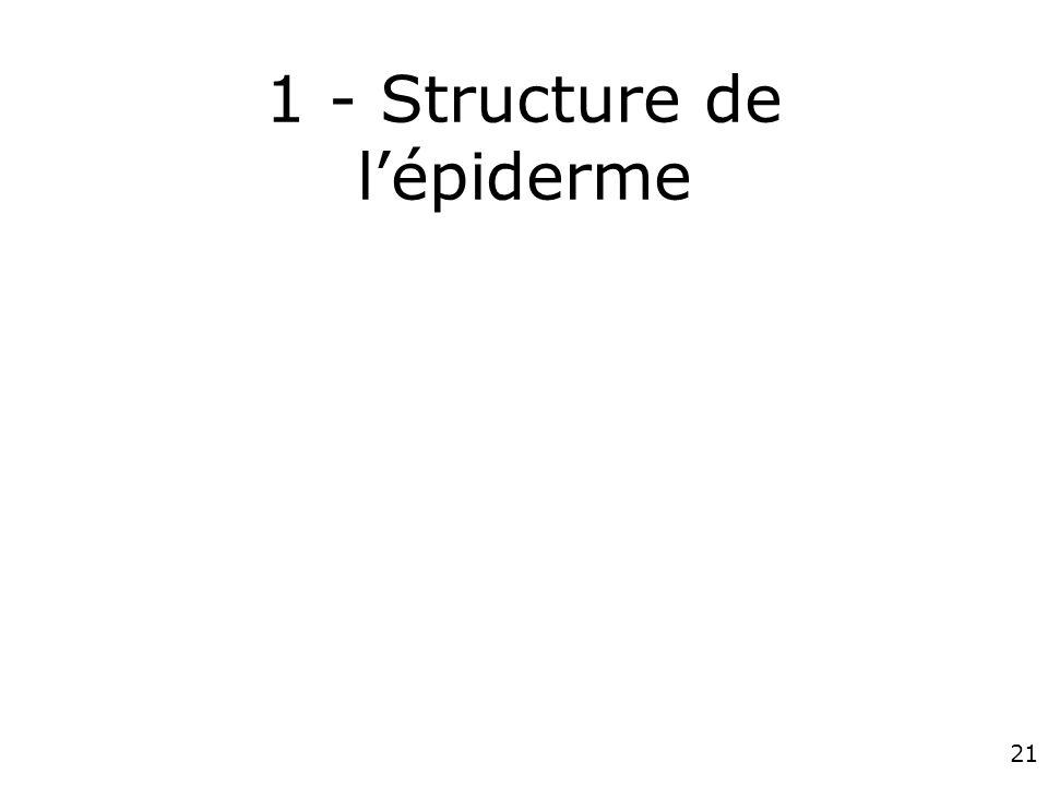 21 1 - Structure de lépiderme