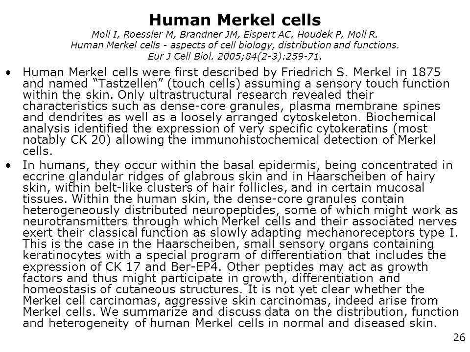 26 Human Merkel cells Moll I, Roessler M, Brandner JM, Eispert AC, Houdek P, Moll R.