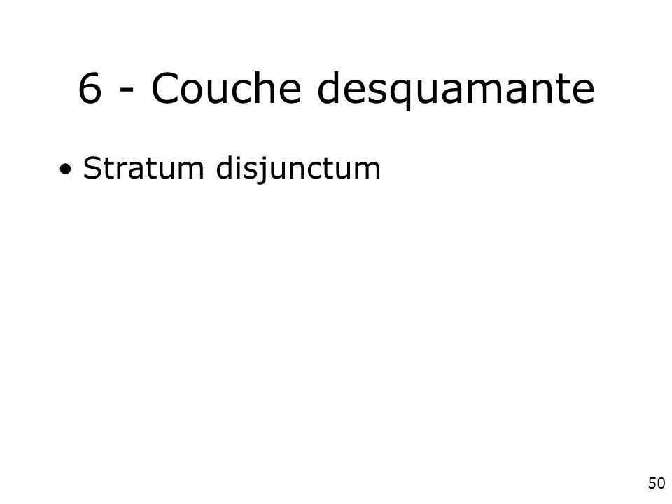 50 6 - Couche desquamante Stratum disjunctum