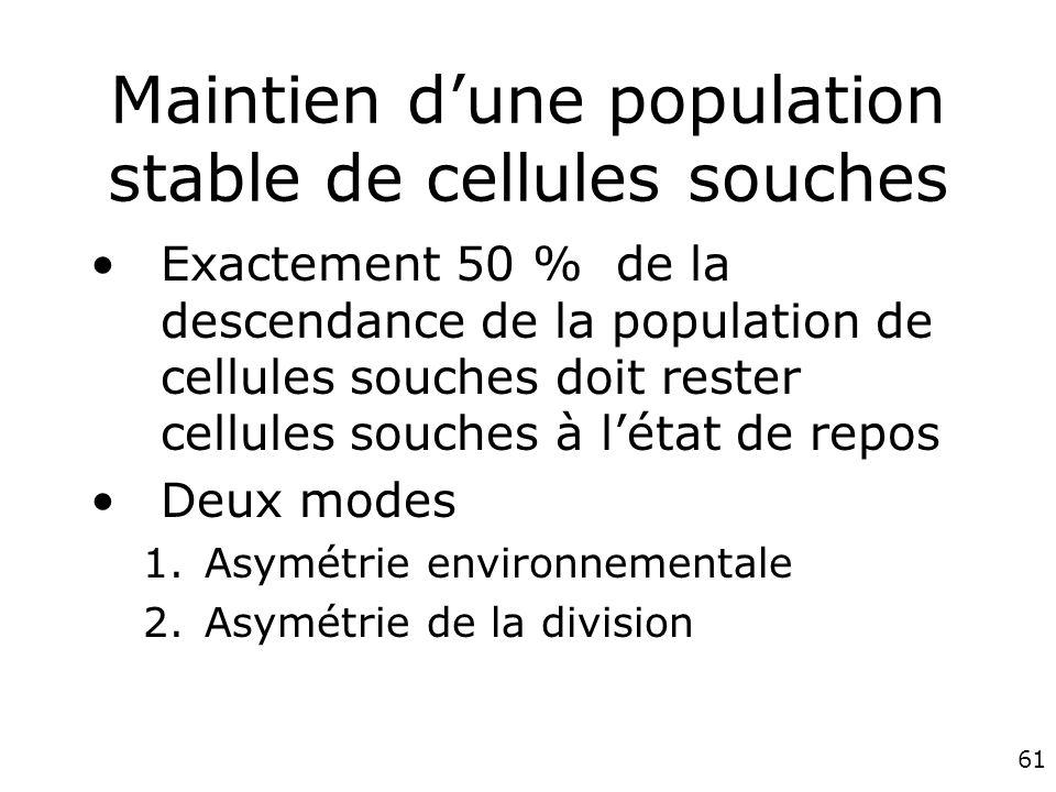 61 Maintien dune population stable de cellules souches Exactement 50 % de la descendance de la population de cellules souches doit rester cellules souches à létat de repos Deux modes 1.Asymétrie environnementale 2.Asymétrie de la division