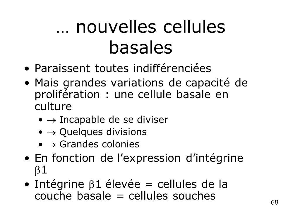 68 … nouvelles cellules basales Paraissent toutes indifférenciées Mais grandes variations de capacité de prolifération : une cellule basale en culture Incapable de se diviser Quelques divisions Grandes colonies En fonction de lexpression dintégrine1 Intégrine 1 élevée = cellules de la couche basale = cellules souches
