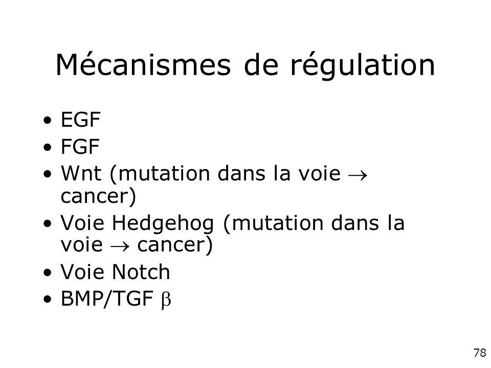 78 Mécanismes de régulation EGF FGF Wnt (mutation dans la voie cancer) Voie Hedgehog (mutation dans la voie cancer) Voie Notch BMP/TGF