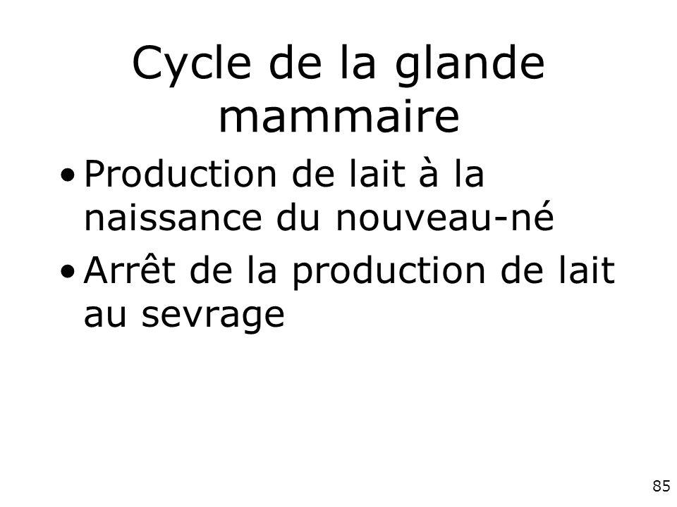 85 Cycle de la glande mammaire Production de lait à la naissance du nouveau-né Arrêt de la production de lait au sevrage
