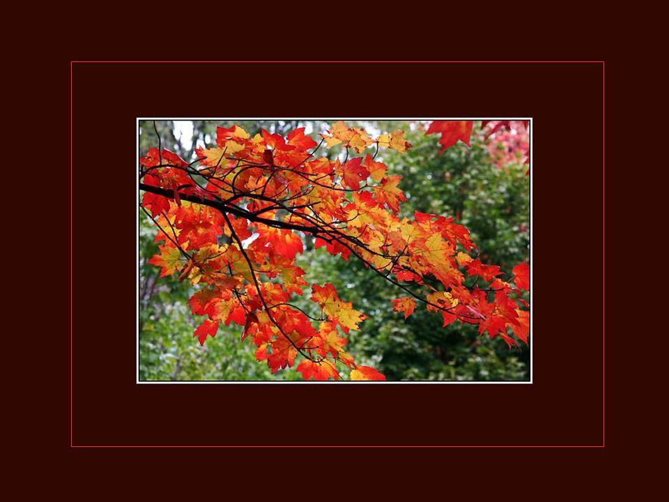 Les feuilles mortes se ramassent à la pelle; Tu vois, je n'ai pas oublié... Les feuilles mortes se ramassent à la pelle; Les souvenirs et les regrets