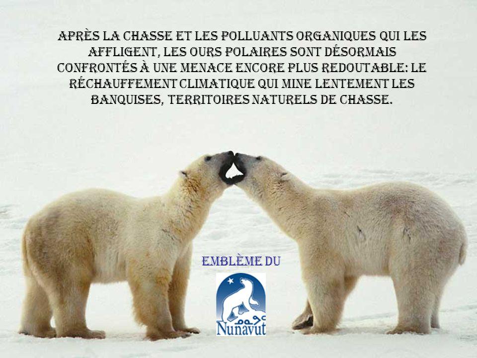 Motel arctique avec toutes les commodités pour lours polaire!!!