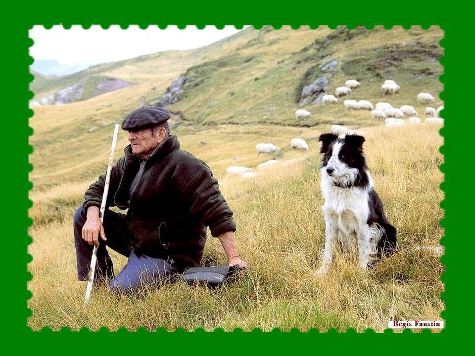 Après cette journée de transhumance (ou parfois ces journées, la distance ne pouvant se couvrir en un seul jour) bêtes et berger ont besoin dun repos bien mérité.