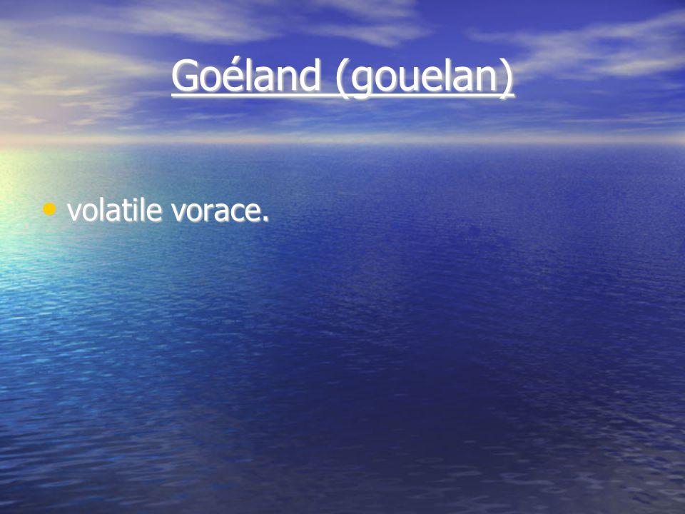 Goéland (gouelan) volatile vorace. volatile vorace.