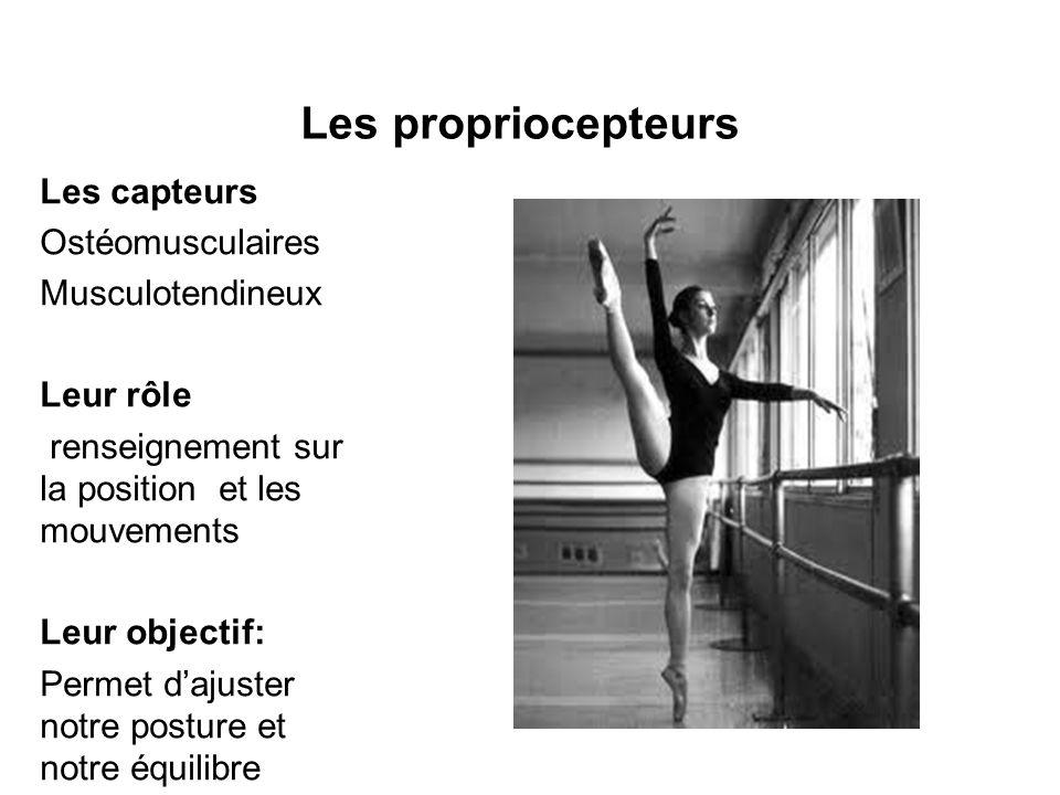Les propriocepteurs Les capteurs Ostéomusculaires Musculotendineux Leur rôle renseignement sur la position et les mouvements Leur objectif: Permet dajuster notre posture et notre équilibre