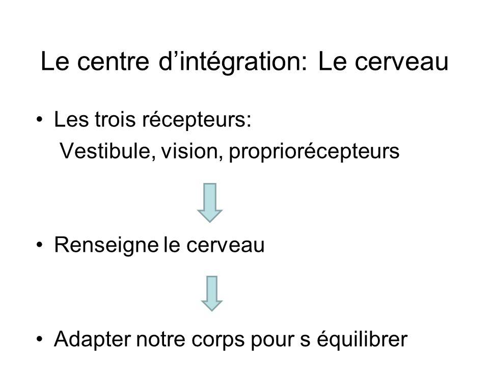 Le centre dintégration: Le cerveau Les trois récepteurs: Vestibule, vision, propriorécepteurs Renseigne le cerveau Adapter notre corps pour s équilibrer