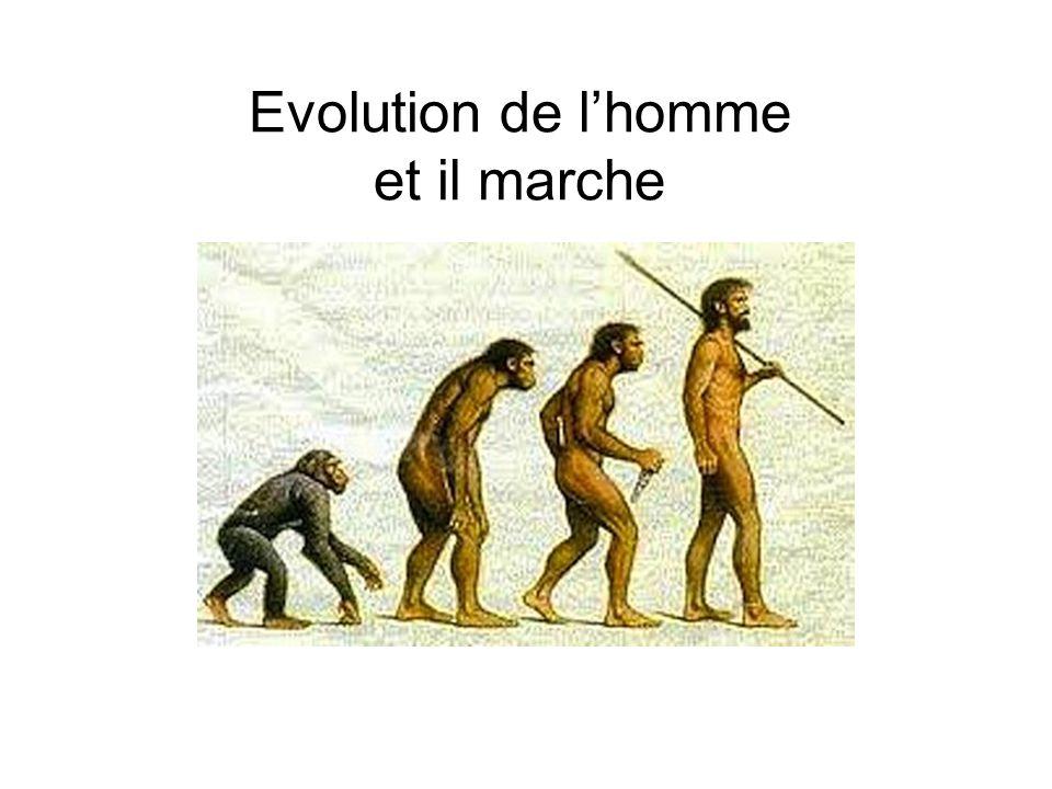 Evolution de lhomme et il marche