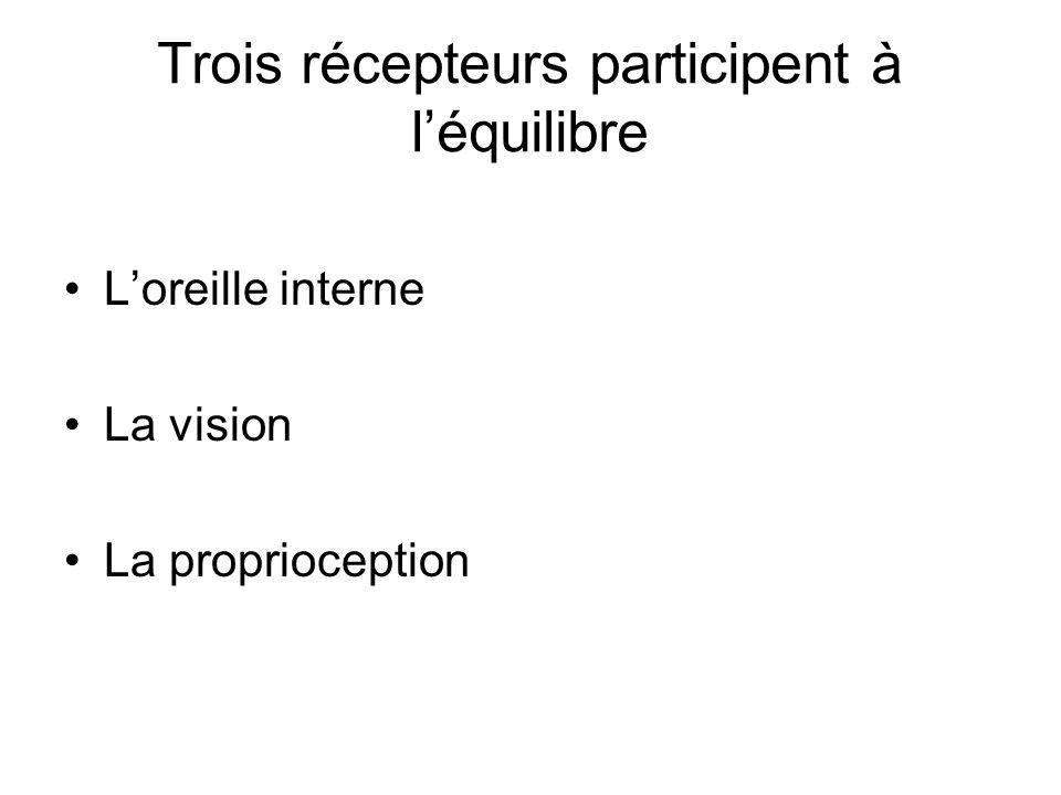 Trois récepteurs participent à léquilibre Loreille interne La vision La proprioception