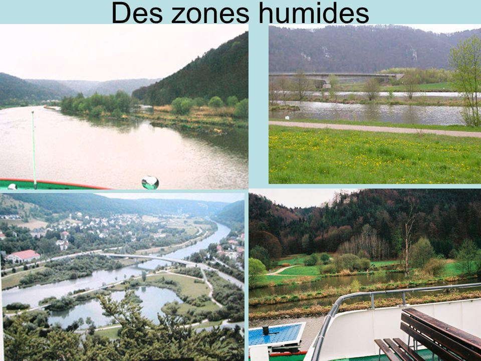 Des zones humides