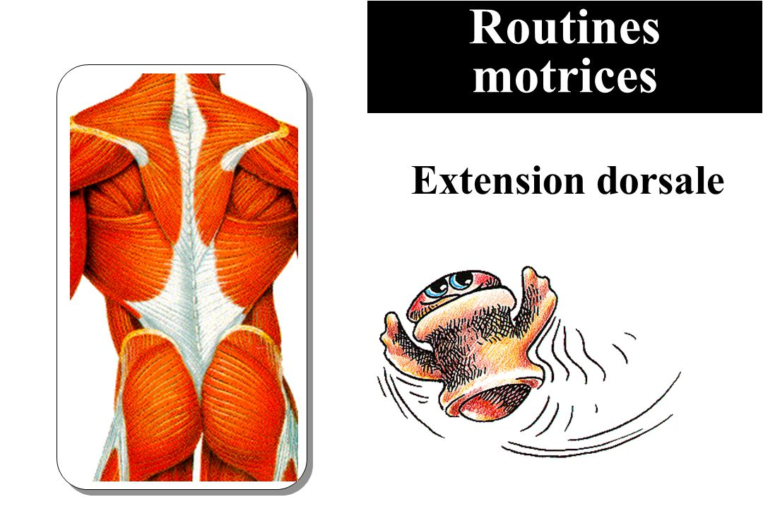 Routines motrices Extension dorsale