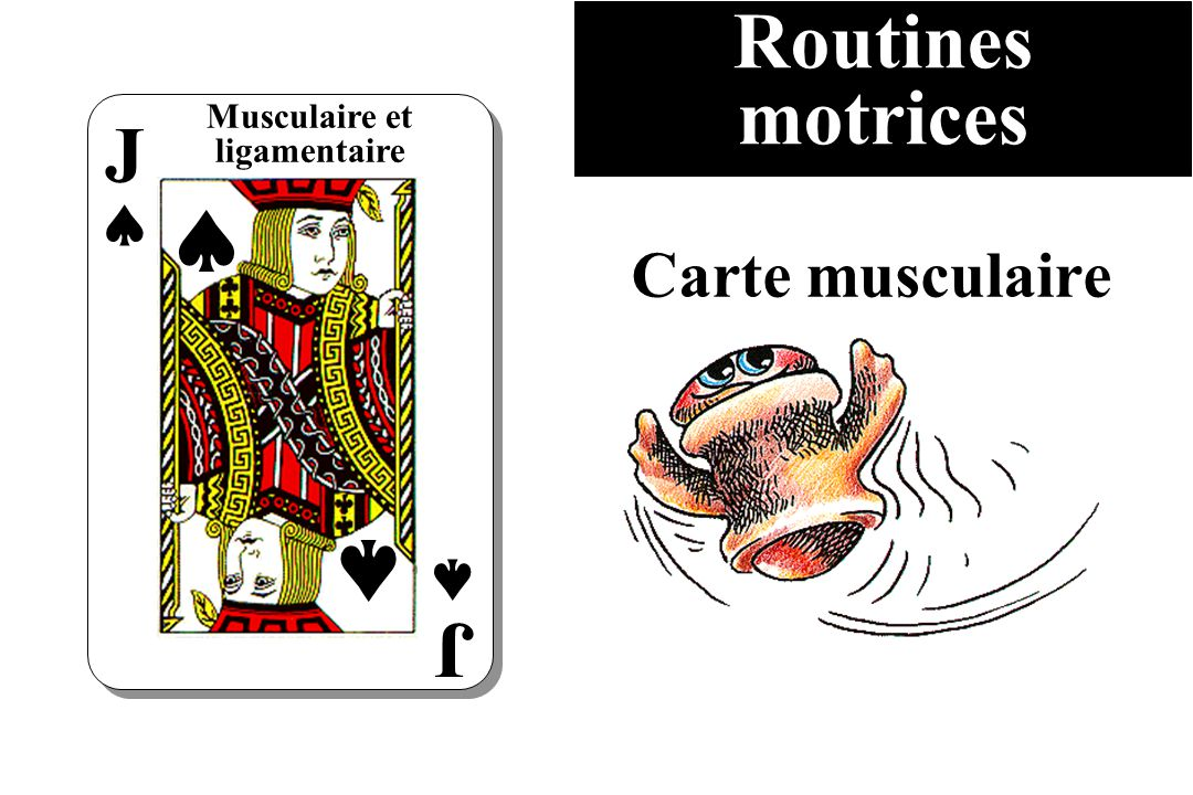 Routines motrices Musculaire et ligamentaire J J Carte musculaire