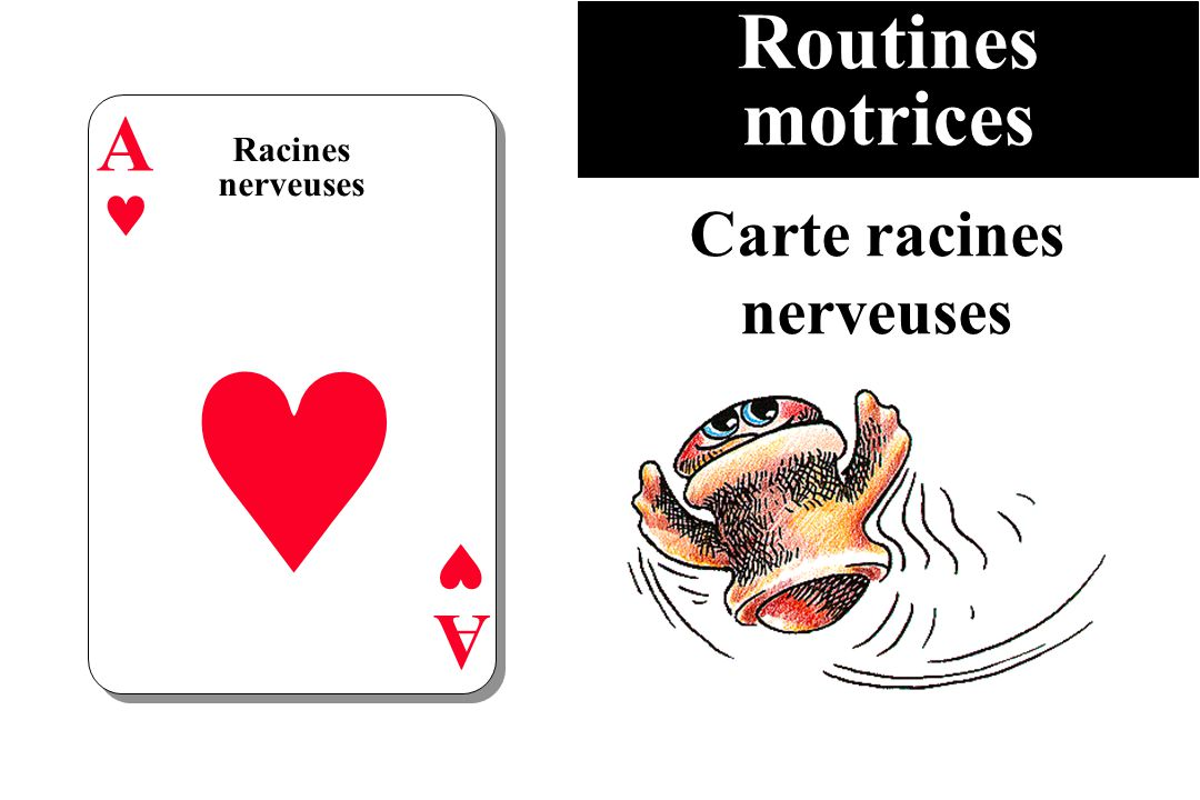 Routines motrices Racines nerveuses A A Carte racines nerveuses