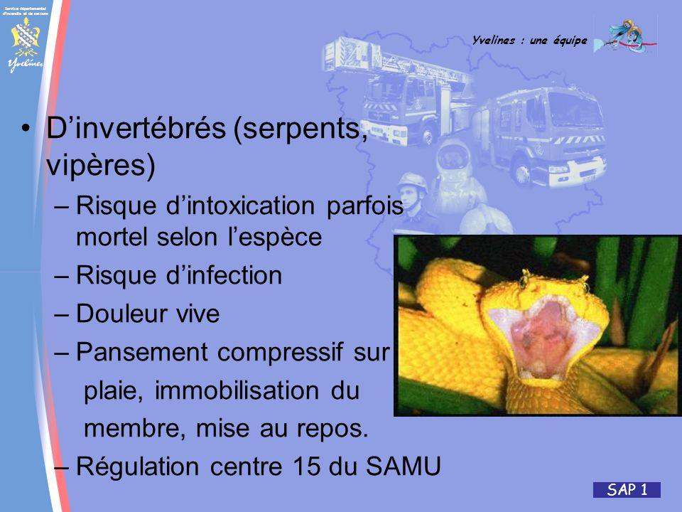 Service départemental d'incendie et de secours Yvelines : une équipe SAP 1 Dinvertébrés (serpents, vipères) –Risque dintoxication parfois mortel selon