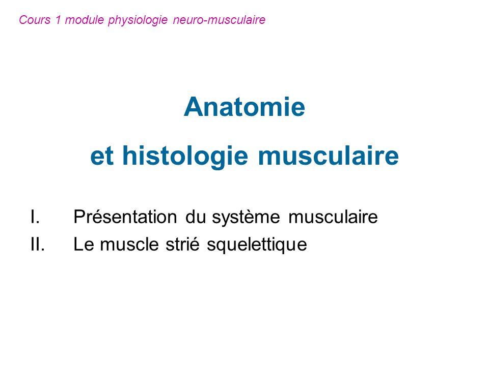 I.Présentation du système musculaire.